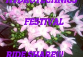 festival ride share